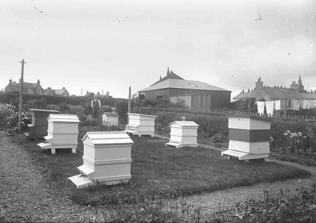 Beehives at Willow Road