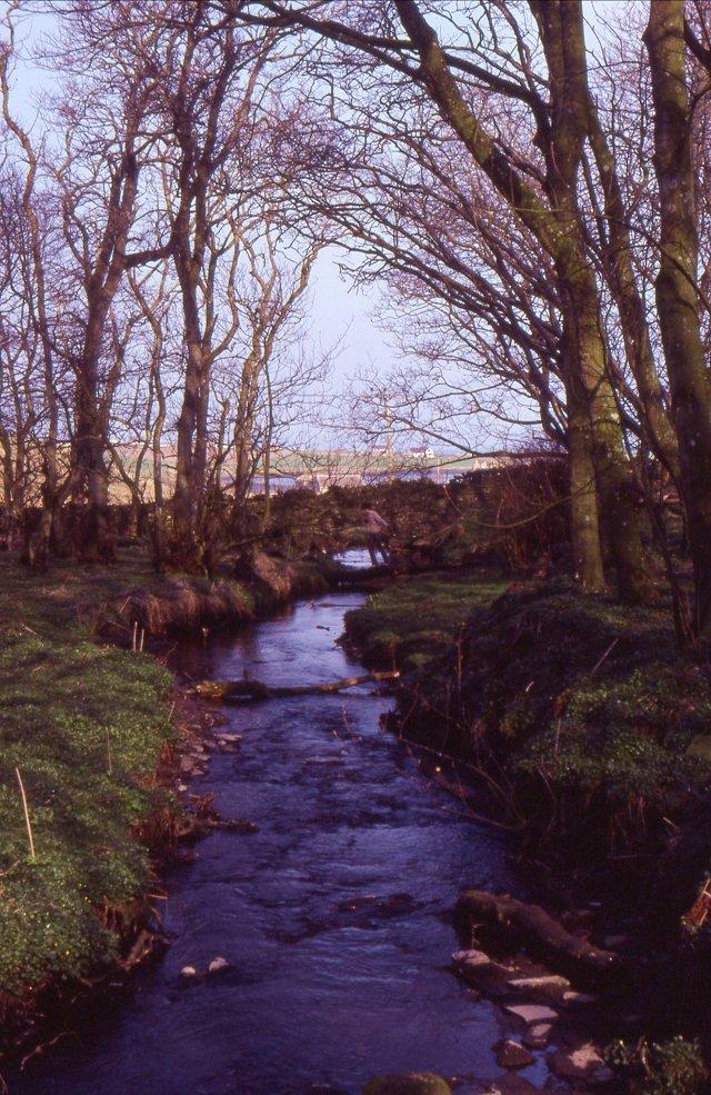 Woods at Binscarth