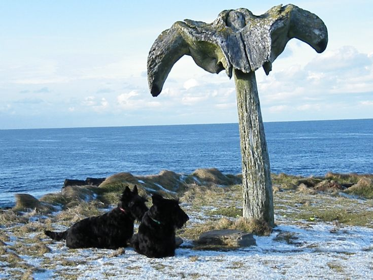 BIRSAY - Whale bone