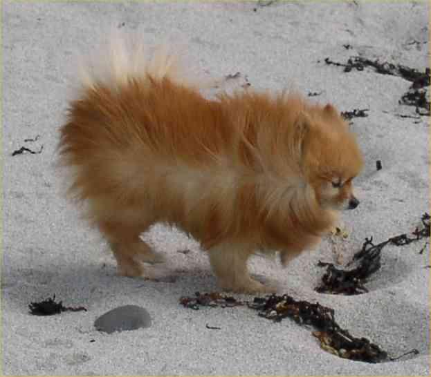 Mitzi at Newark, Deerness, May 3rd 2004
