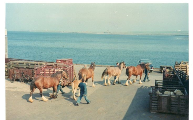 Jock's horses on the move