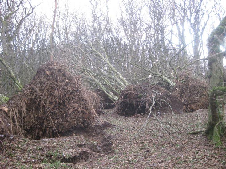 Storm damage, Berstane Woods