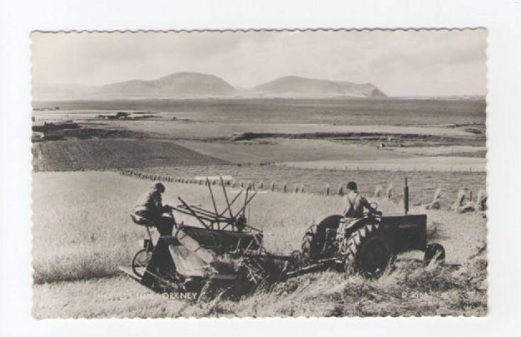 Harvest Time Orkney