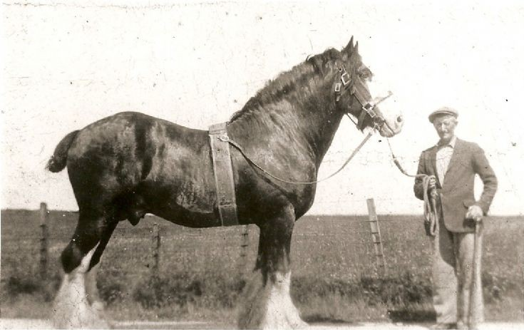 Grandad Donald Peace with stallion