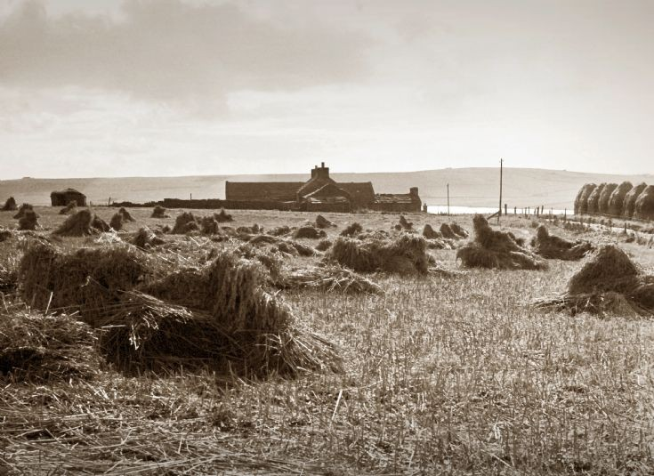 Harvest time in Birsay, Upper Grindally